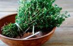 Народные средства от сухого кашля взрослым, список трав и методов