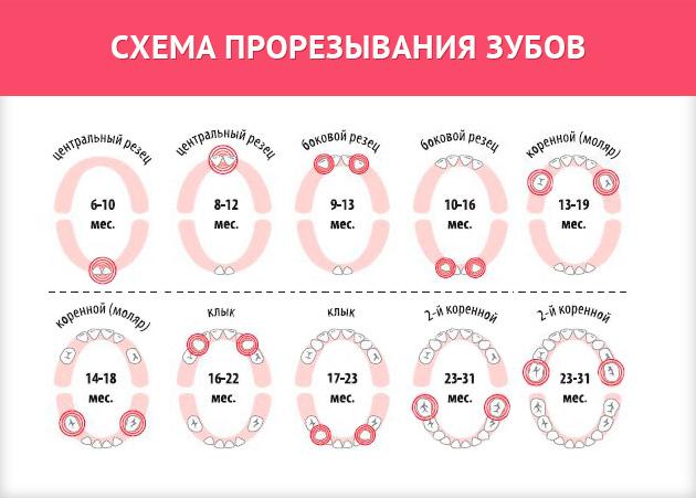 Схема прорезывания зубов у детей