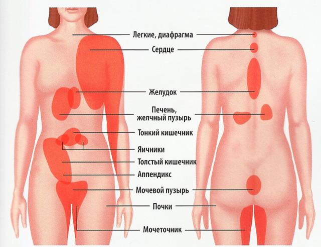 Причины боли в пояснице с левой стороны сзади: симптомы, лечение, фото