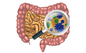 Дисбактериоз кишечника: симптомы и лечение у взрослых