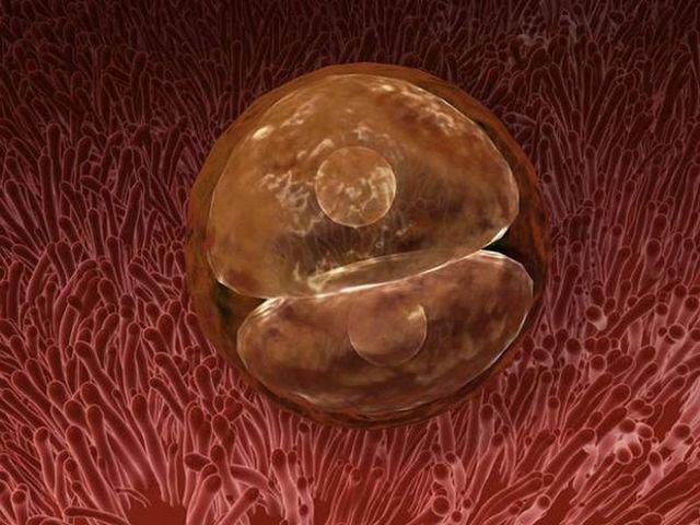Признаки овуляции и ощущения для определения беременности