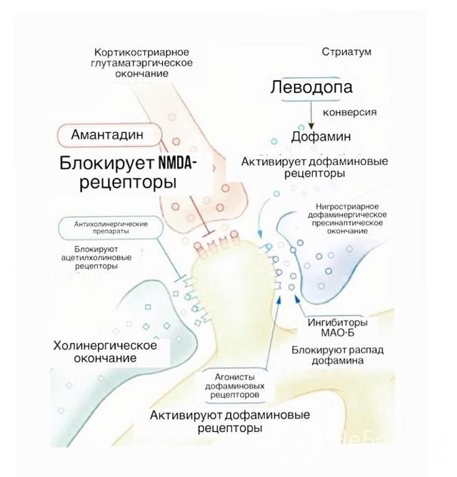 Болезнь Паркинсона: симптомы и лечение