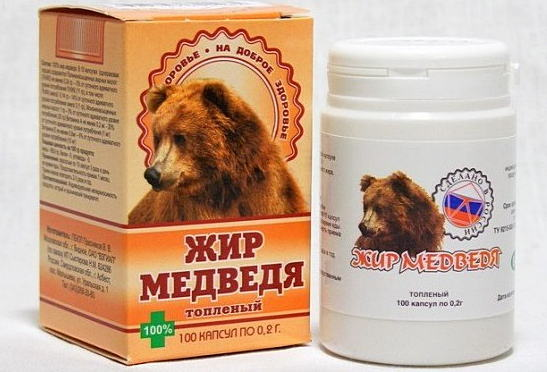 Медвежий жир: лечебные свойства препарата и противопоказания к применению