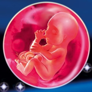 23 неделя беременности: что происходит с малышом и с мамой