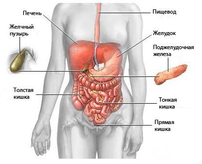 Как провести подготовку к МРТ органов брюшной полости