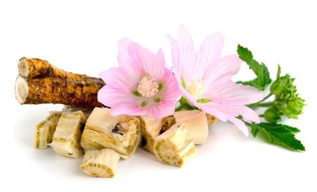 Мукалтин при сухом кашле, особенности приема препарата и противопоказания