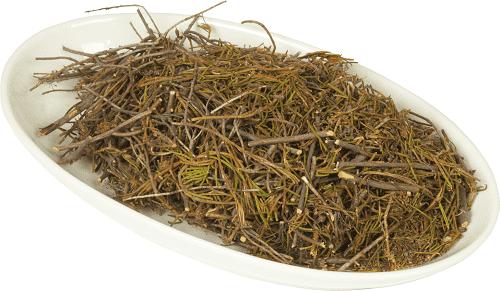Лечебные свойства и противопоказания к использованию багульника болотного