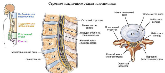 Признаки и симптомы протрузии шейного отдела позвоночника
