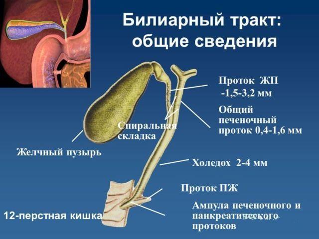 Симптомы и способы лечения заболеваний желчного пузыря