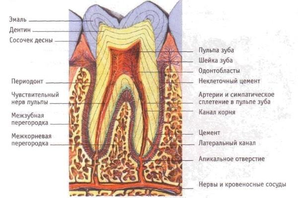 Пульпит зуба: что это такое?
