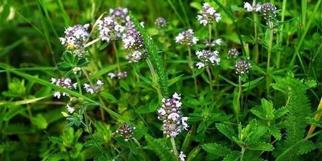Какие травы помогают от кашля, травы при различных видах кашля