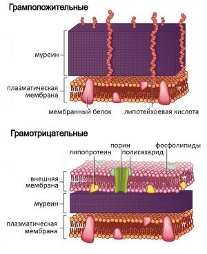 Эритромициновая мазь от прыщей: активные вещества, применение, противопоказания