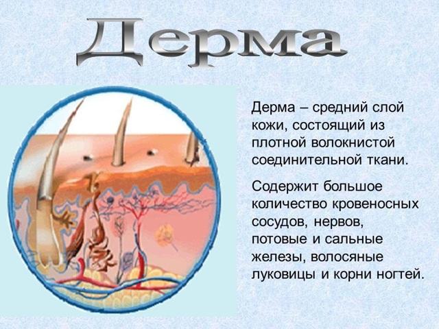 Лавровый лист от прыщей: рецепты народной медицины