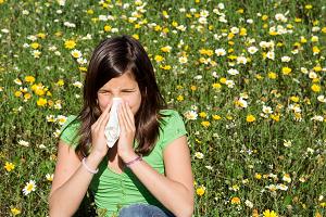 Аллергическая реакция на амброзию, симптомы, анализы на наличие аллергии