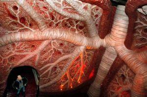 Допплерографическое (УЗДГ) исследование сосудов головного мозга и шеи