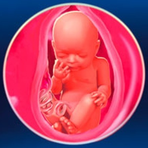31 неделя беременности: что происходит с мамой и с малышом
