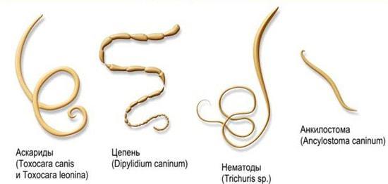 Паразиты в организме человека: симптомы и лечение