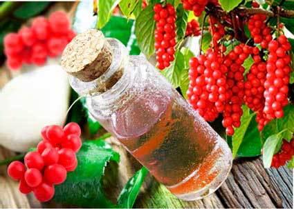 Какие имеет лимонник китайский лечебные свойства и противопоказания