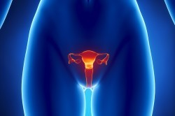 Гирудотерапия: показания и противопоказания лечения пиявками