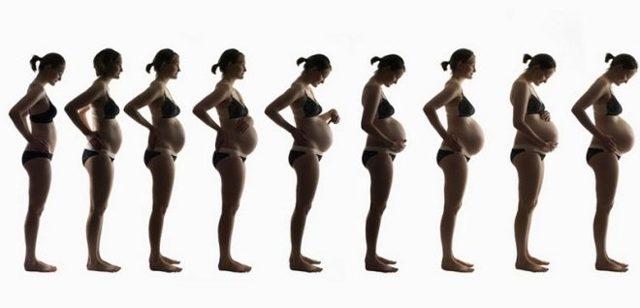 Увелечение плода и рост живота при беременности