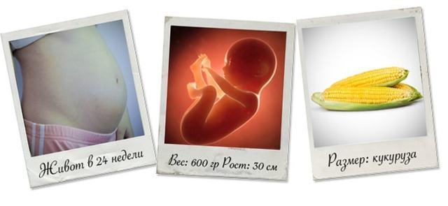 Организм ребенка и женщины на 24 неделе беременности