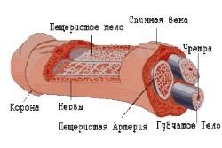 Лечение и причины отека половых органов