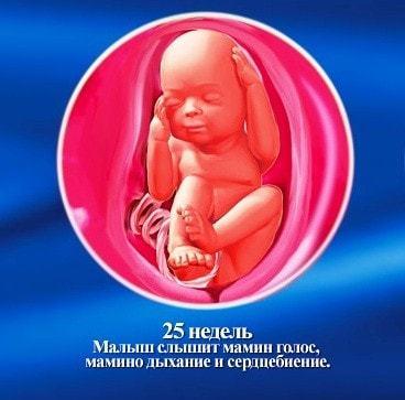 Развите плода на 25 недели беременности: всё о вашем ребенке