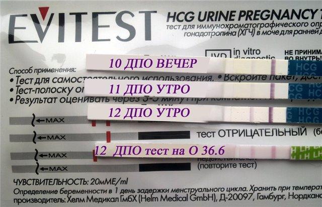На каком дне задержки тест показывает появление беременность