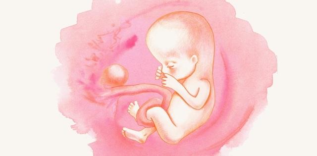 13 неделя беременности: ощущения женщины, фото плода