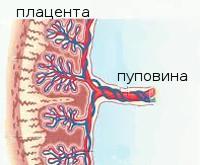 Причины нарушения маточно плацентарного кровотока