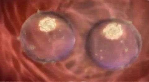 Можно ли забеременеть после секса во время месячных